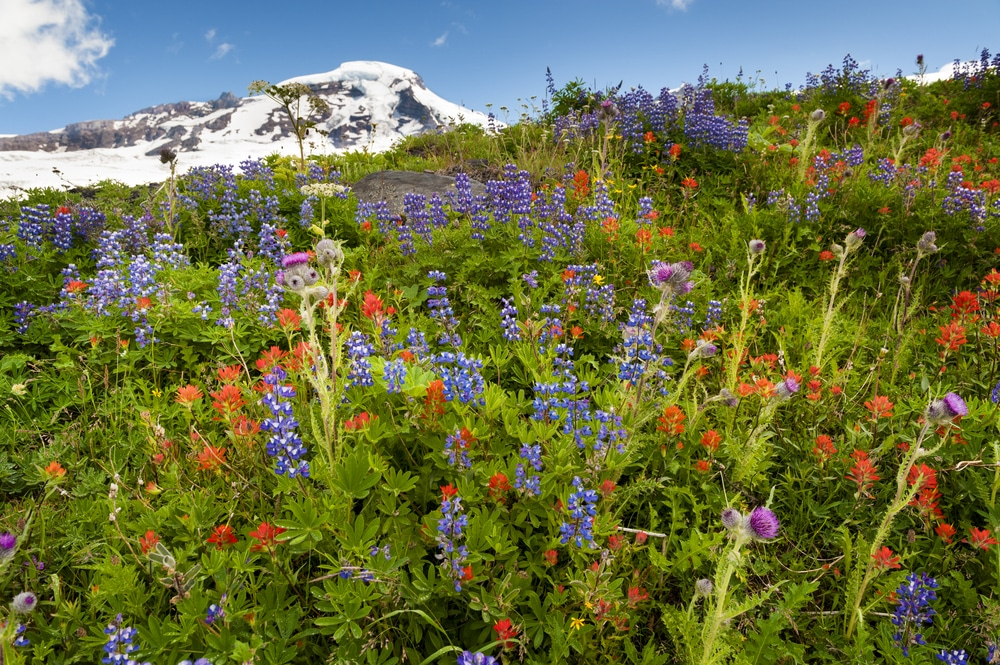 The best Mt. Baker hikes this summer